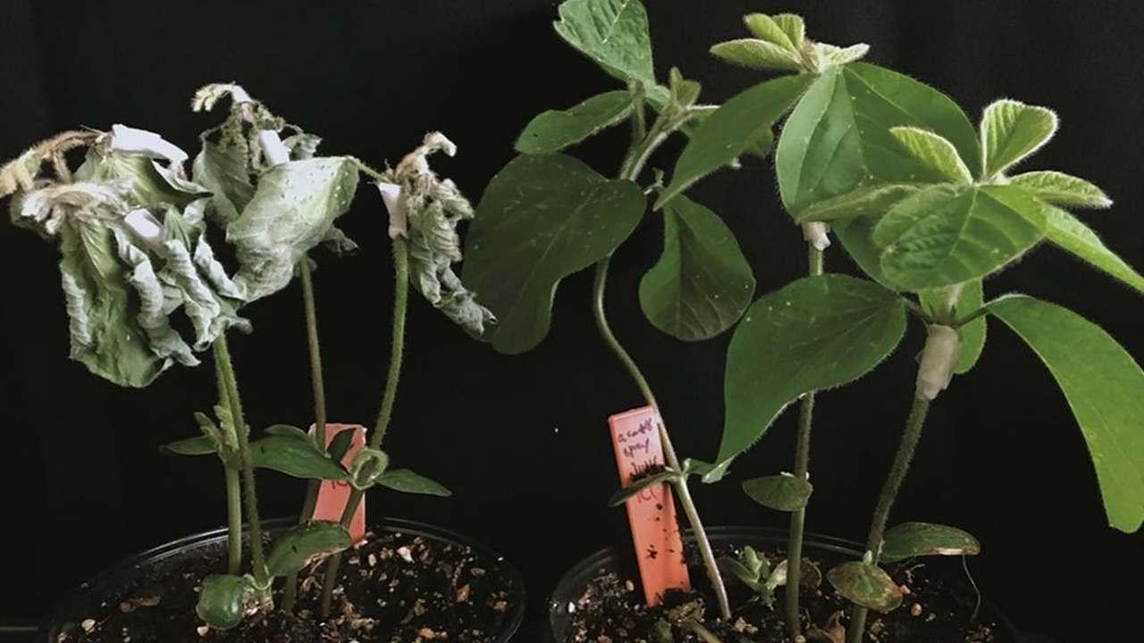 Вместо удобрений и пестицидов: феромоны червей защищают растения от патогенов