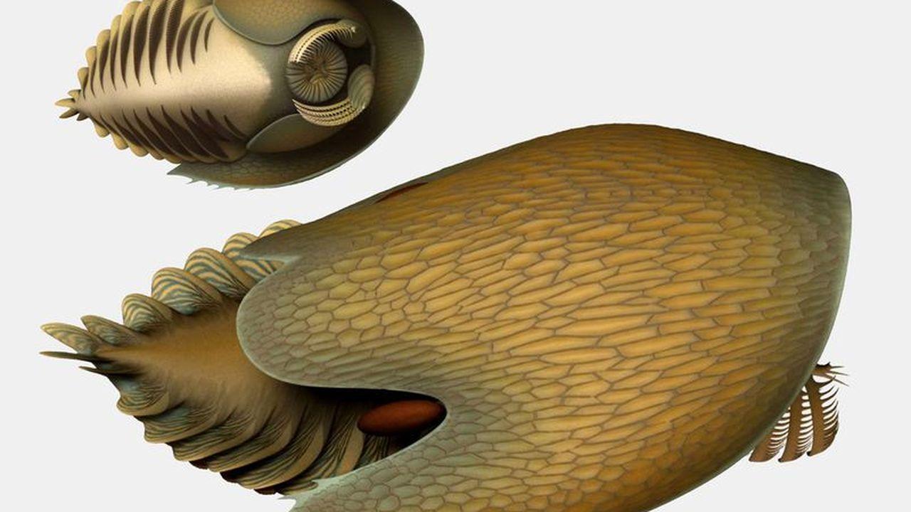 """Палеонтологи нашли """"Тысячелетнего сокола"""" из """"Звёздных войн"""" кембрийского периода"""