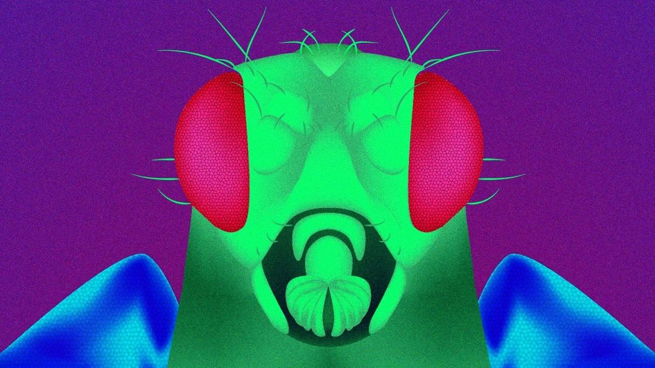 Российские генетики раскрыли секрет долголетия мух-мутантов