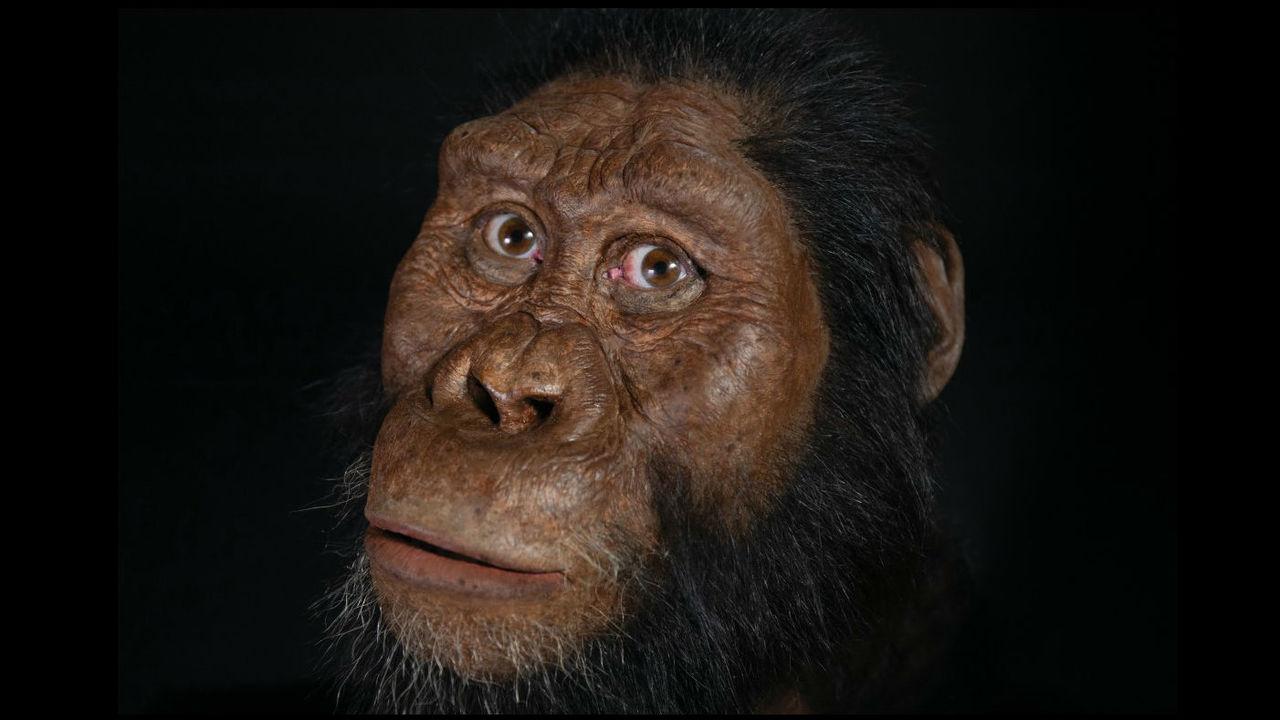 Череп древнейшего австралопитека изменил взгляды учёных на историю нашего вида