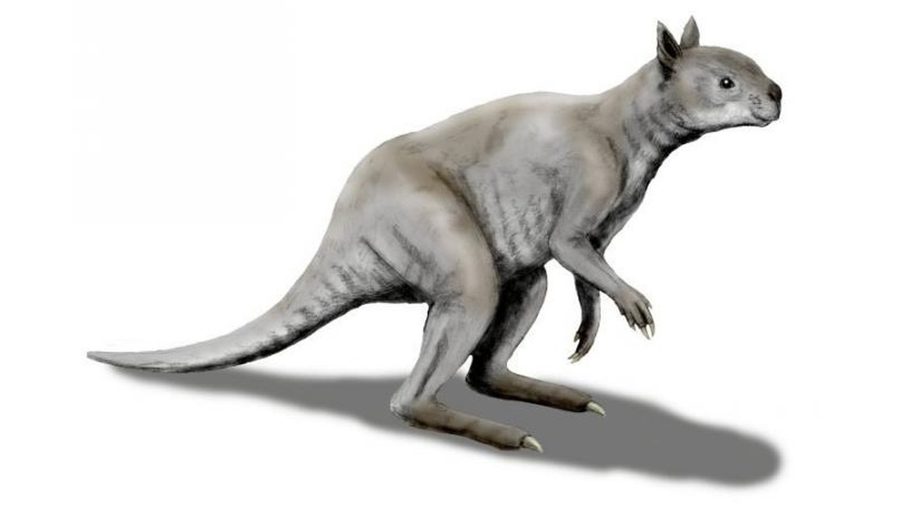 Гигантские кенгуру выживали в ледниковую эпоху благодаря сходству с пандами