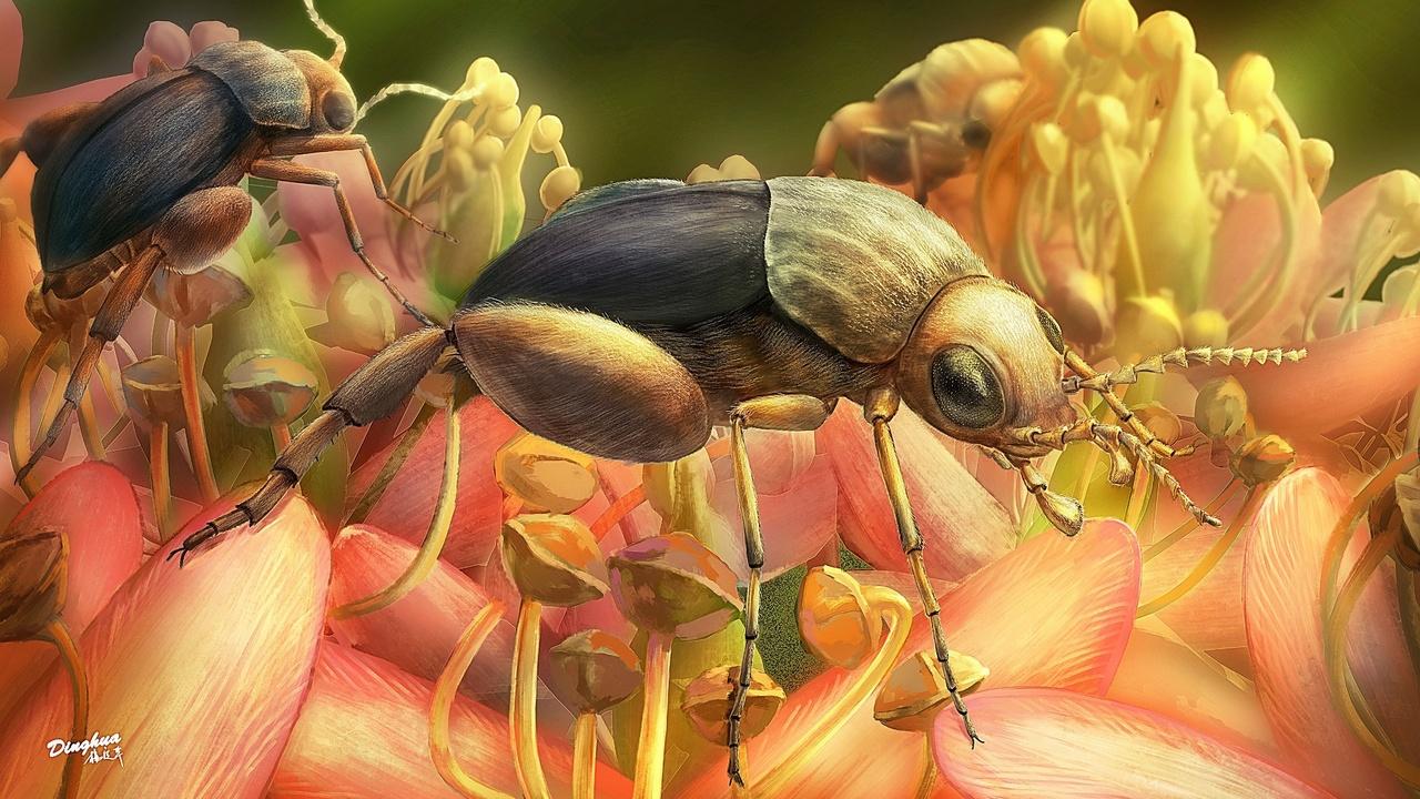 В янтаре найден древнейший опылитель цветковых