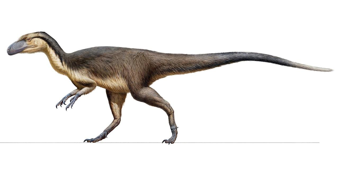 В Австралии найдена сокровищница мелового периода