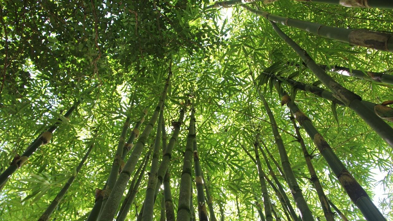 Фонд XPrize заплатит за новые технологии для оценки биоразнообразия лесов