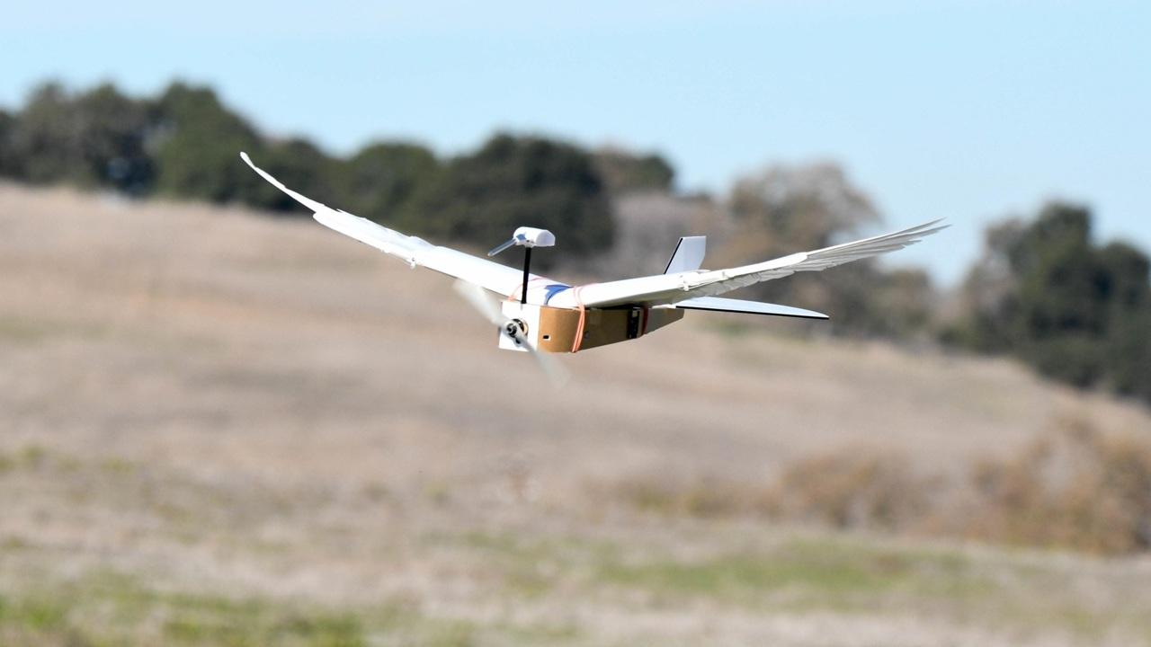 Робот получил оперение голубя и теперь летает как птица