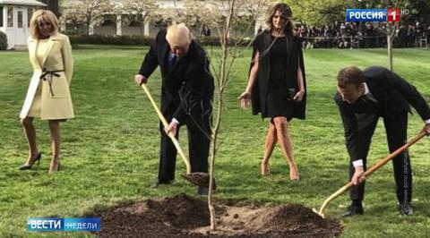 С лужайки Белого дома пропал дуб Макрона