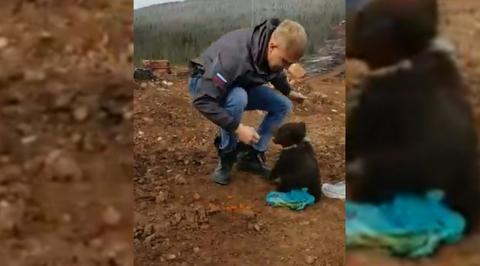 Голодный медвежонок отобрал пакет с едой у жителя Сахалина