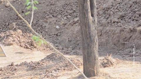 Хорошо спрятался: интернет-пользователи пытаются найти леопарда на фото