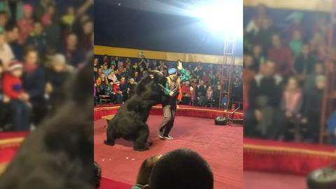 Цирковой медведь атаковал дрессировщика во время представления в Карелии