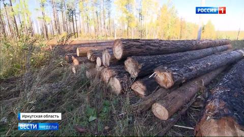 Теперь лес крадут по-новому