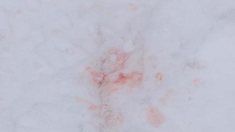 """""""Вести-Калуга"""". Калужская полиция проводит проверку по факту жестокого убийства собаки"""