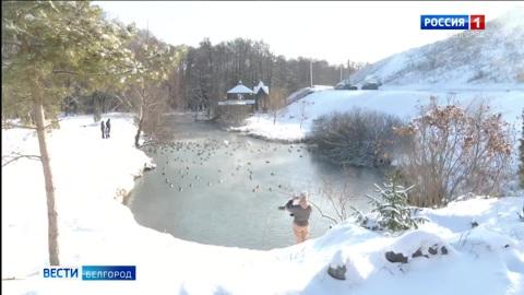 В Белгородской области посчитали зимующих водоплавающих птиц
