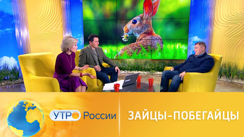 Утро России. Иван Затевахин ответил на неожиданные вопросы о зайцах