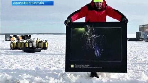 Фотограф Виктор Лягушкин устроил выставку на дне Белого моря
