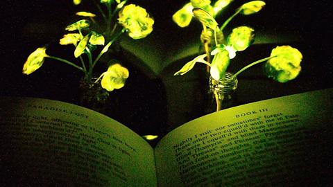 Прорыв: инженеры создали ярко светящиеся растения, которые можно перезаряжать