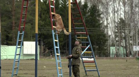 Планета собак. Служебные собаки