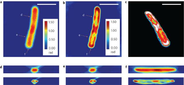 Новая технология создаёт модель клеток, объединяя изображения её слоёв, снятых с помощью светового микроскопа