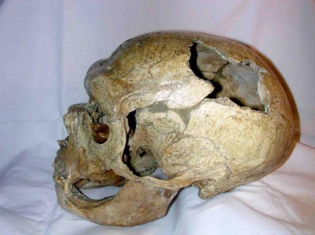 Череп неандертальца из пещеры Ла-Шапель-о-Сен