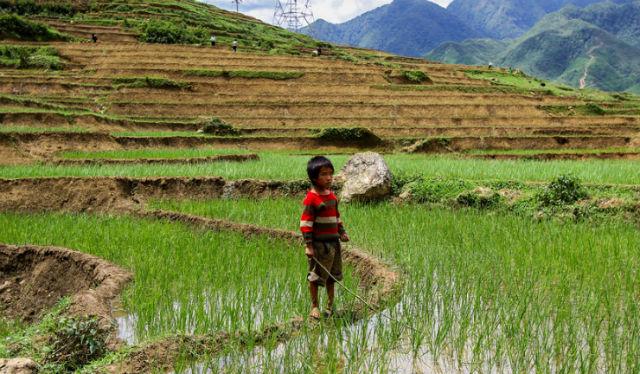 С помощью риса, способного расти в солёной почве и при засухе можно будет накормить голодных жителей стран развивающегося мира