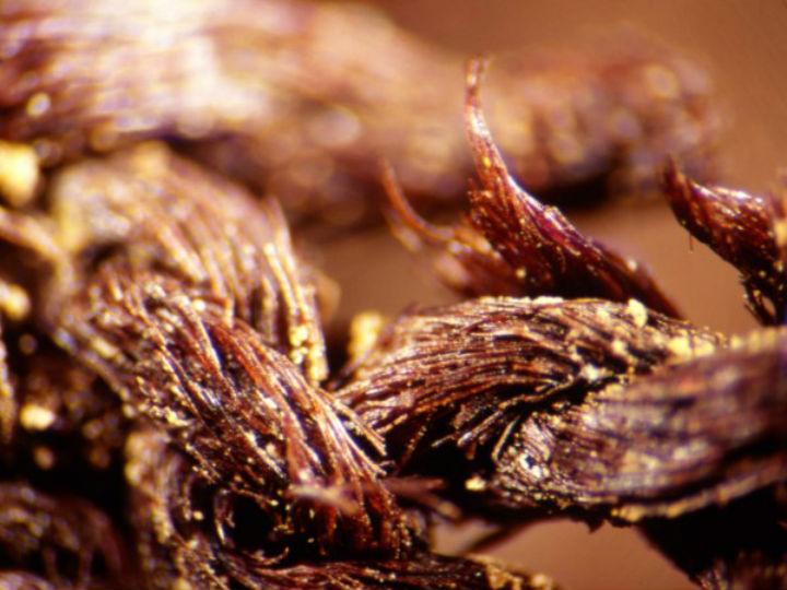 Волокна были пропитаны особым бальзамом, рецепт которого сохранялся на протяжении веков
