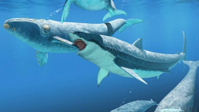 Существует гипотеза, что гигантские древние акулы охотились на предков современных китов