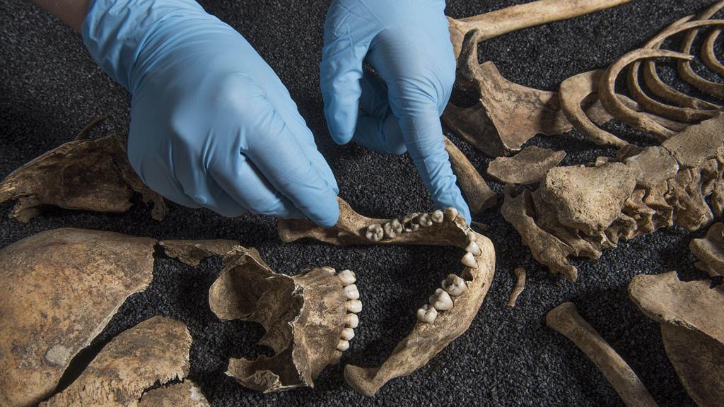 Человеческие останки, найденные при раскопках на юге Лондона. Фото: Museum of London