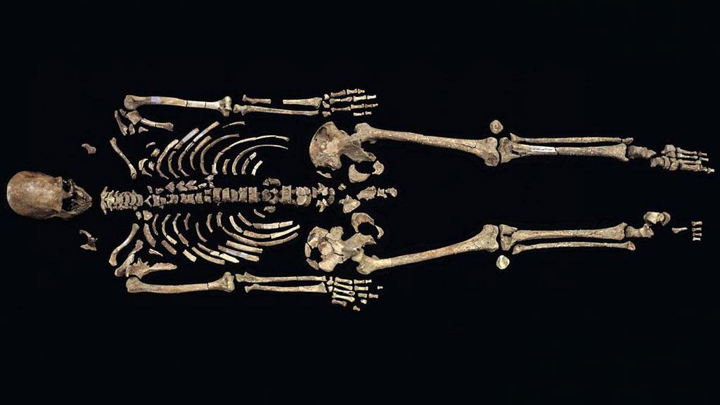 Полный скелет Кенневикского человека. Фото: Chip Clark / Smithsonian Institution