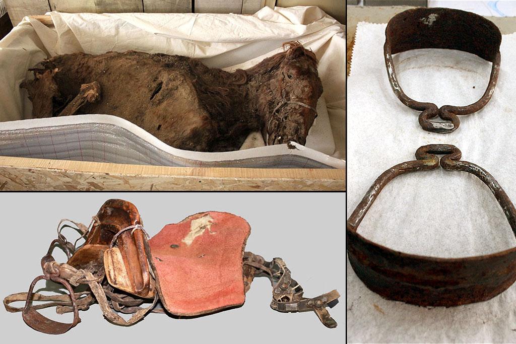 Мумия лошади, седло и стремена, найденные в захоронении женщины в горах Монгольского Алтая. Фото: The Mongolian Observer/The Center of Cultural Heritage of Mongolia