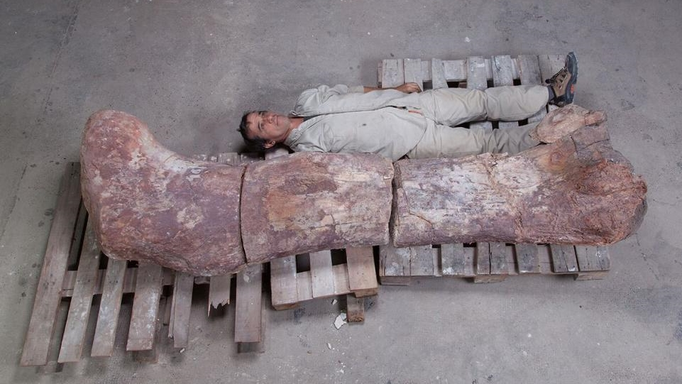 Сравнение размеров: бедренная кость Patagotitan mayorum и член исследовательской группы.