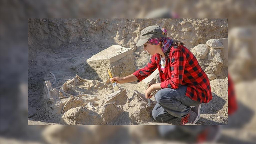 Скелет лошади, найденный на раскопках в крепости Сардурихинили. Фото: Anadolu Agency
