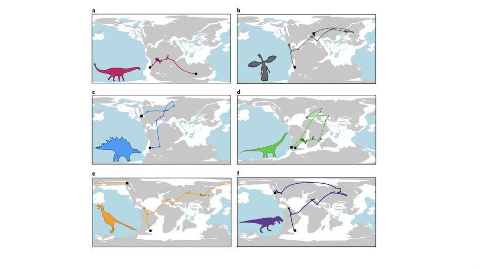 Шесть реконструированных эволюционных пути для различных видов динозавров: a) Rhoetosaurus brownei, b) Archaeopteryx lithographica, c) Stegosaurus stenops, d) Andesaurus delgadoi, e) Dromaeosaurus albertensis, f) Tyrannosaurus rex.