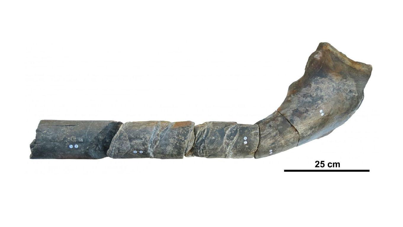 Находка является частью надугловой кости.