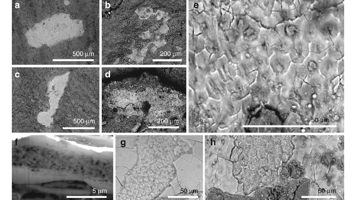 Фосфатизированные мягкие ткани манирапторов под микроскопом.