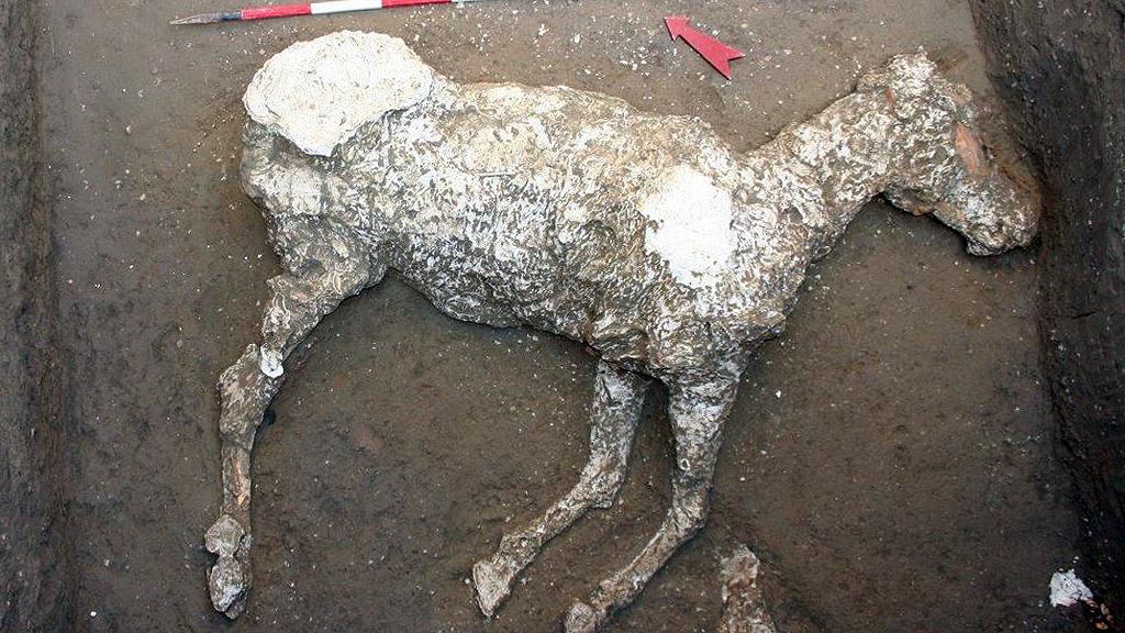 Гипсовая отливка с останков погибшей лошади. Фото: Archaeological site of Pompeii
