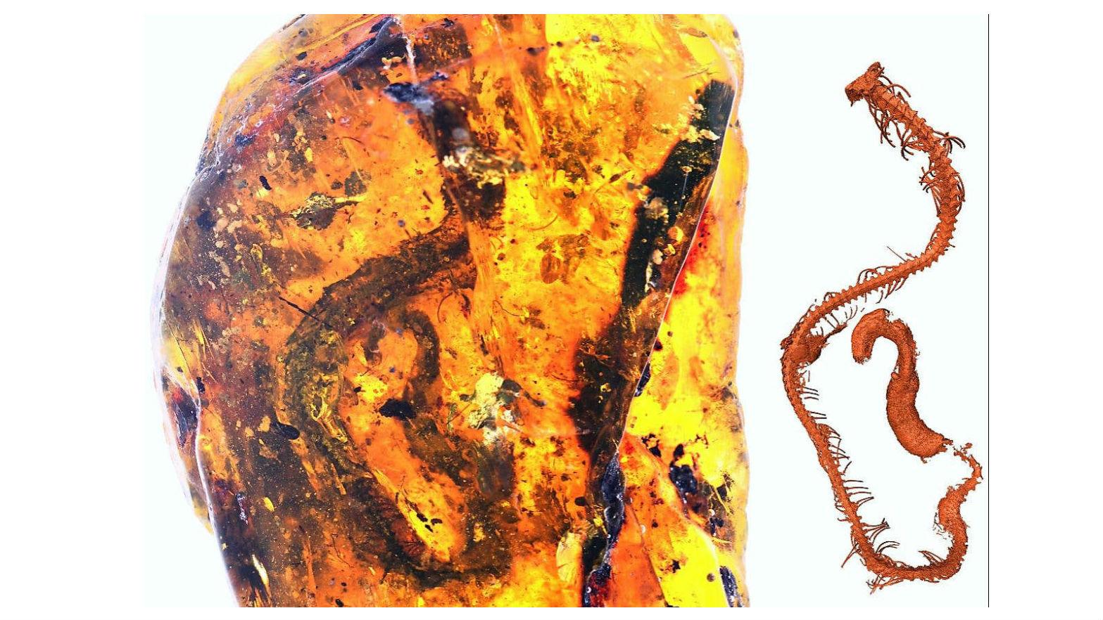 Фрагмент янтаря и 3D-реконструкция скелета змеёныша.