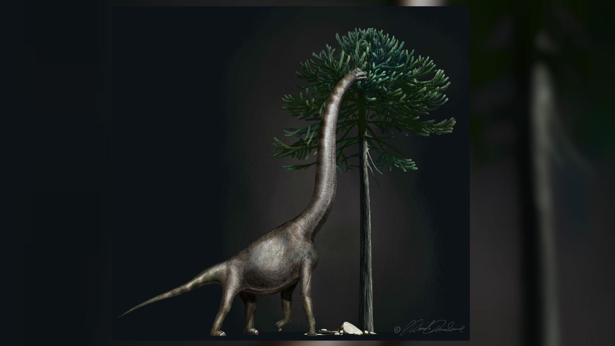 Возможный внешний вид древнего брахиозавра.