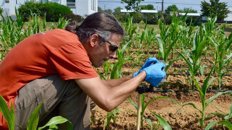 Сигналы бедствия растений, которых начинают поедать насекомые, можно использовать на пользу человека, считают учёные.