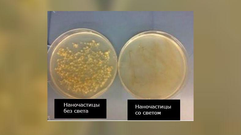 Две чашки Петри с бактериями демонстрируют положение дел до и после воздействия света на наночастицы.