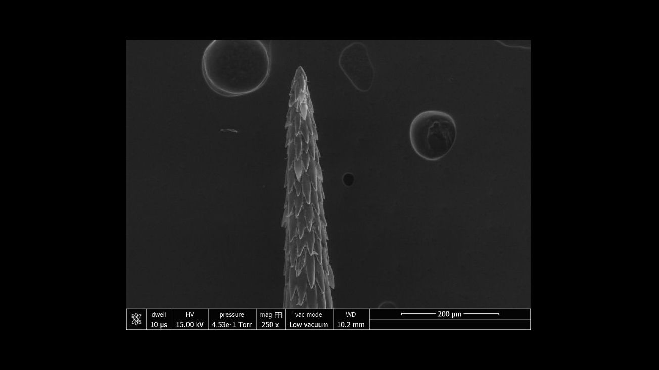 Лабораторные тесты показали, как колючки захватывают своих жертв.