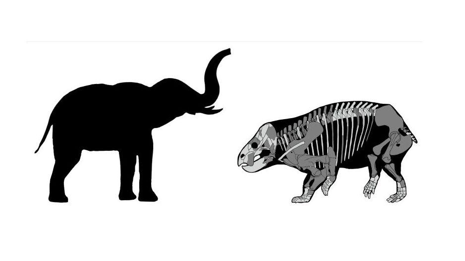 Сравнение Lisowicia bojani с современным слоном.