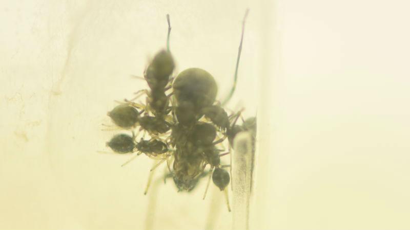 Столь длительная родительская забота, как у пауков-скакунов, встречается лишь у немногих долгоживущих социальных позвоночных.