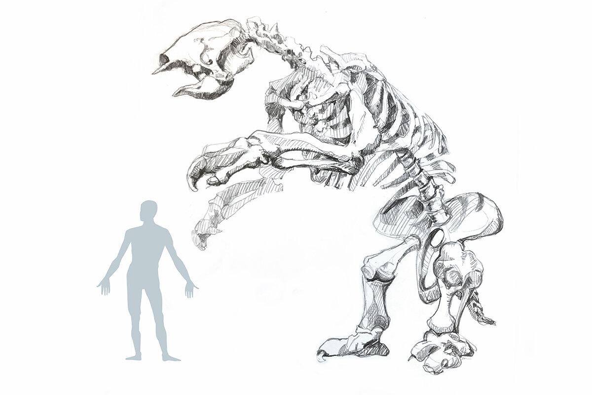 Древний ленивец вида Eremotherium laurillardi вырастал до четырёх метров в высоту.