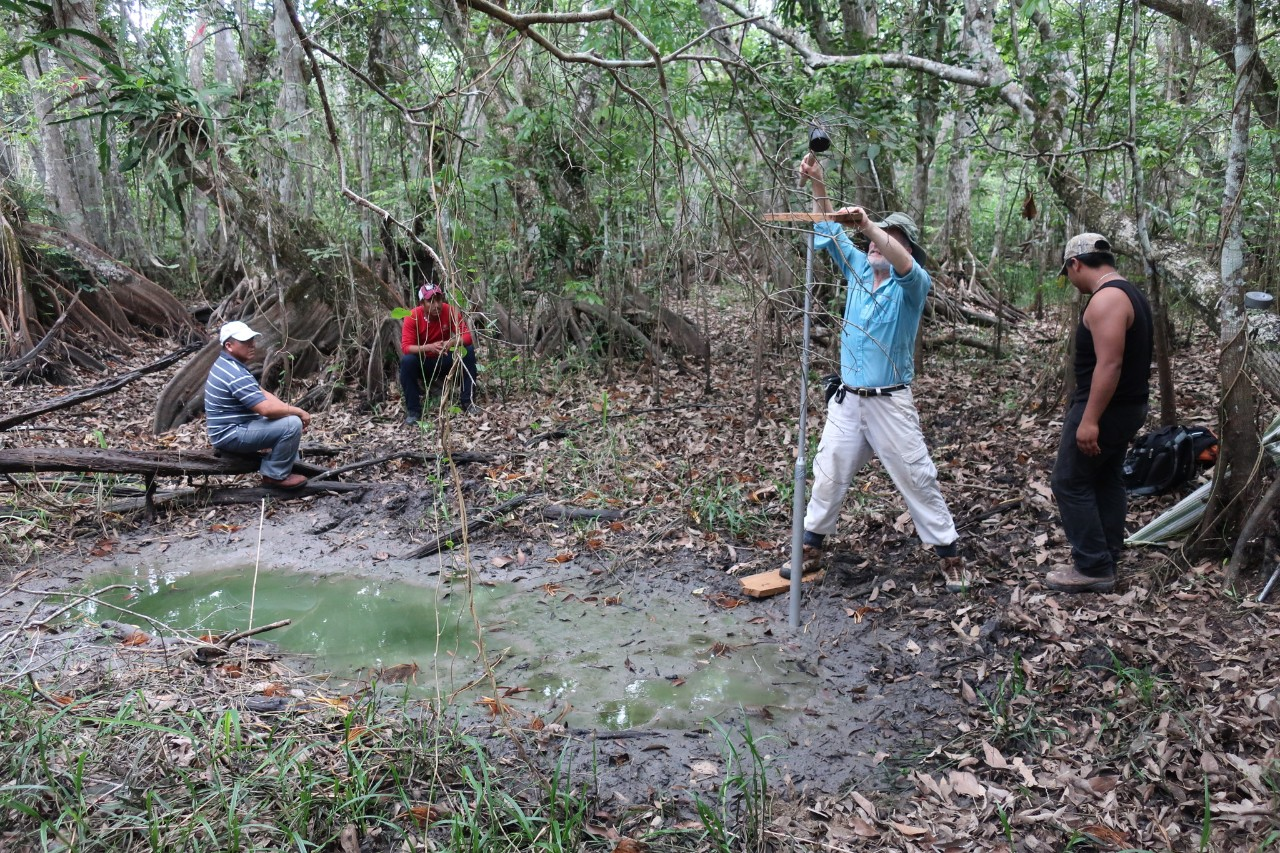 В заболоченных джунглях Юкатана непросто отыскать следы былых полей майя.