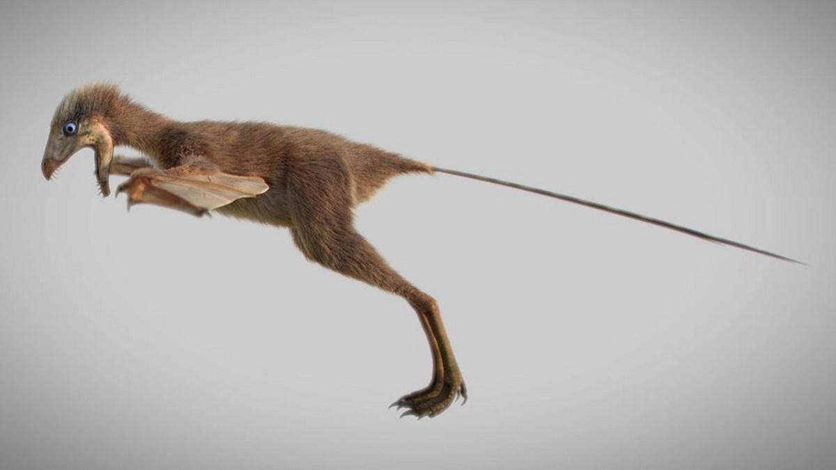 Длина тела амбоптерикса от клюва до кончика хвоста составляла 32-33 сантиметра, а вес не превышал 200 граммов.