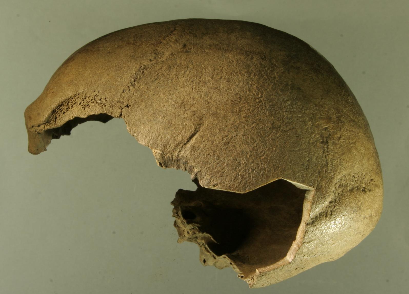 фФрагмент черепа человека, найденного на обнажении Дуванный Яр в низовьях Колымы.