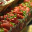 Удмуртия: садоводам-любителям выделят бесплатные места на ярмарках