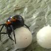 Мир пауков: образ жизни и способы размножения