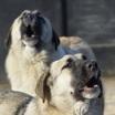 Проблема бездомных животных захлестнула некоторые мегаполисы: громкие нападения бродячих собак в городах