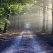 В России леса обретут частных собственников