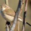Мелкие птицы. Какую роль они играют в экосистеме